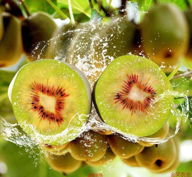 蒼溪紅心獼猴桃